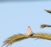 Birdonalimb