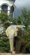 Wild_elephants